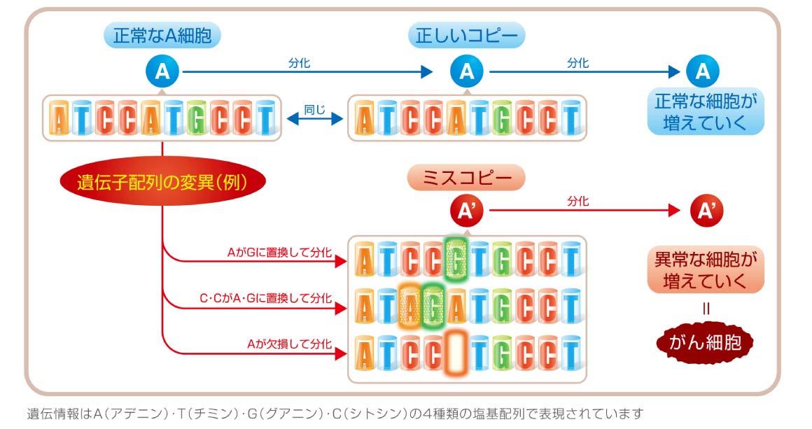 遺伝子配列の変異