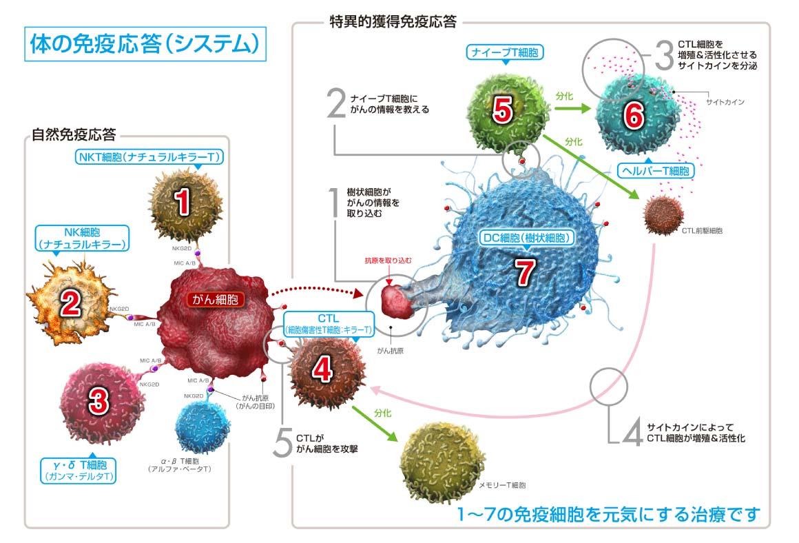 体の免疫応答(システム)