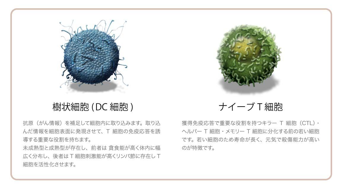 樹状細胞とナイーブT細胞