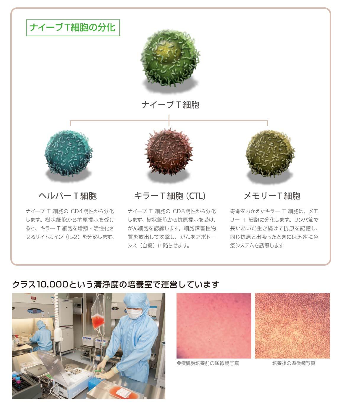 ナイーブT細胞の分化