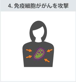 4.免疫細胞ががんを攻撃